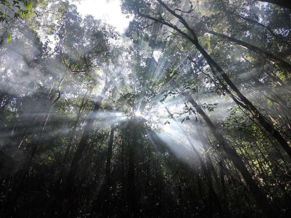 Khám phá Hòn Giao - rừng rêu đầy quyến rũ