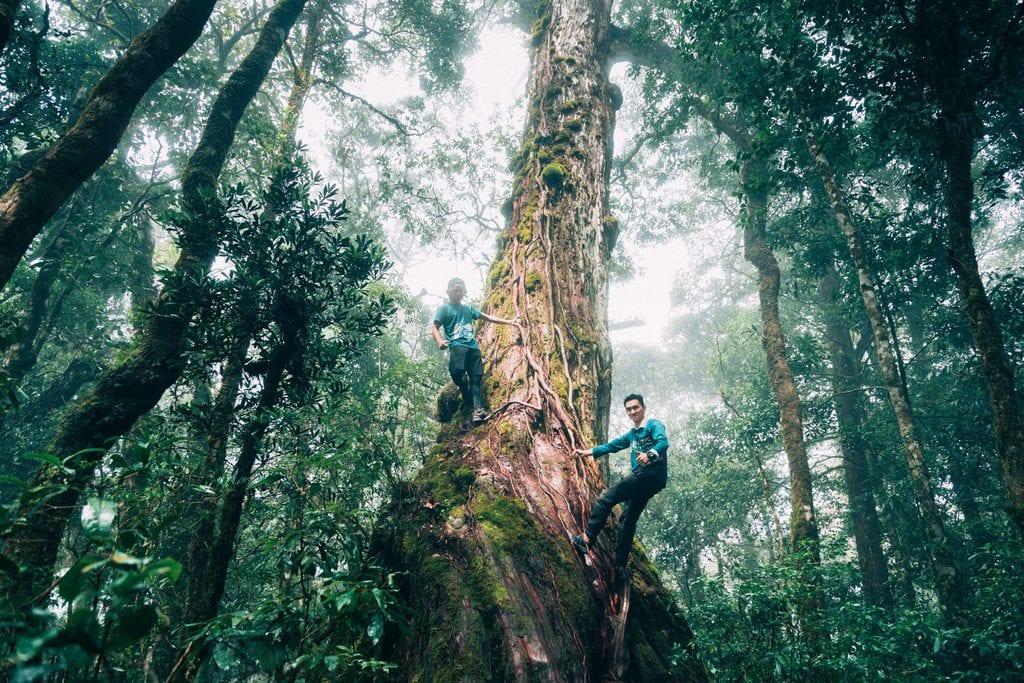 Vườn quốc gia Bidoup - rừng nguyên sinh vẫy gọi