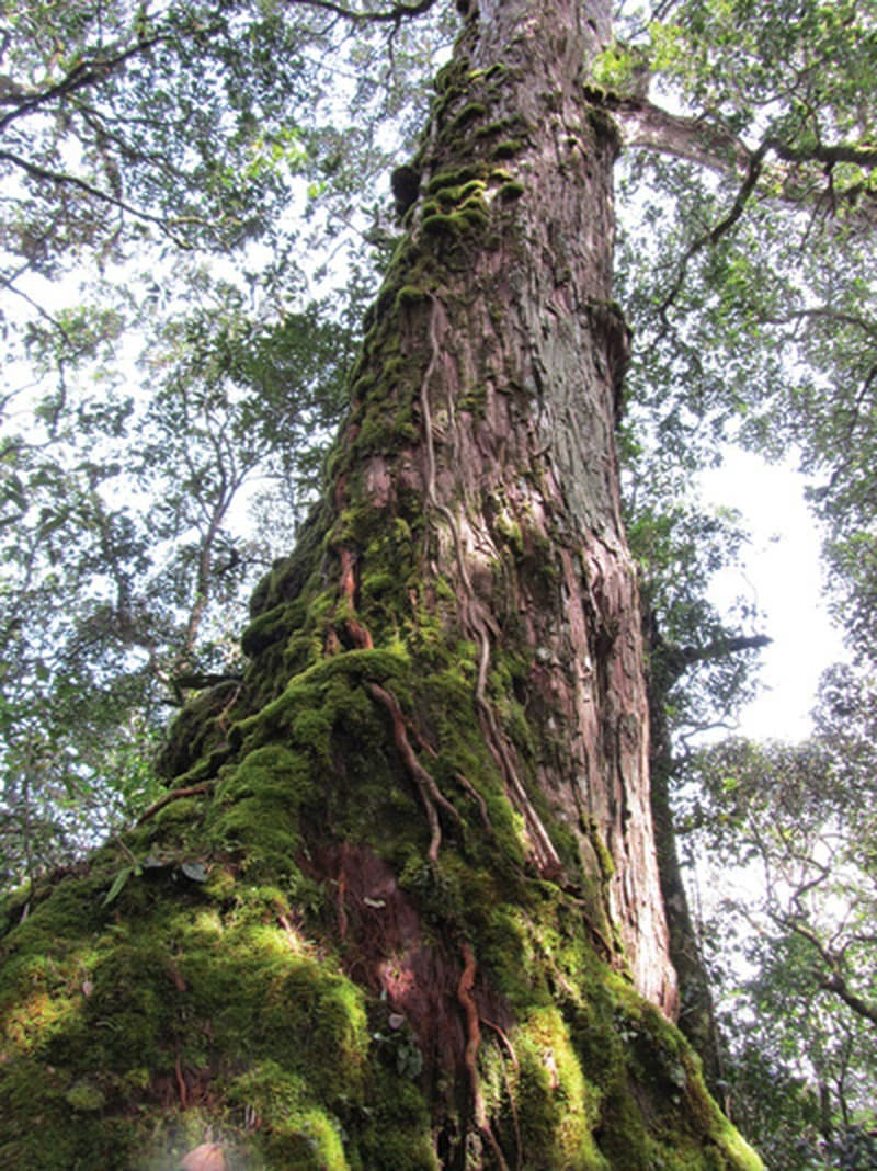 Thế giới tự nhiên đẹp mê hồn ở Bidoup Núi Bà