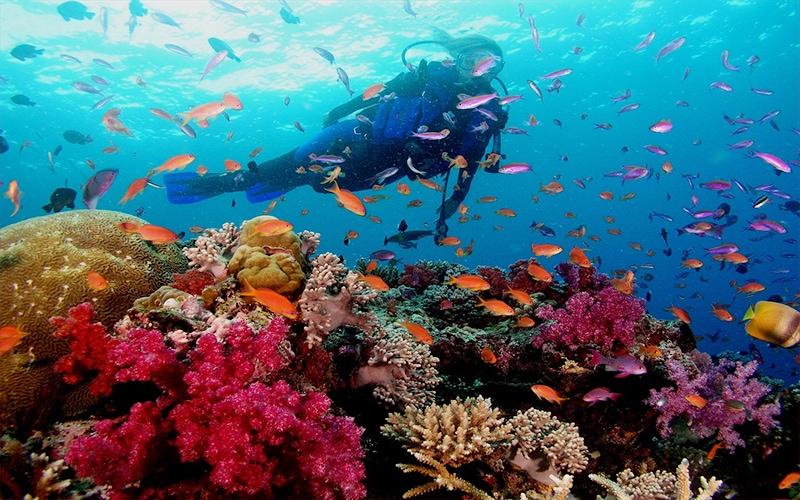 Lặn ngắm san hô khi đi du lịch Ninh Thuận