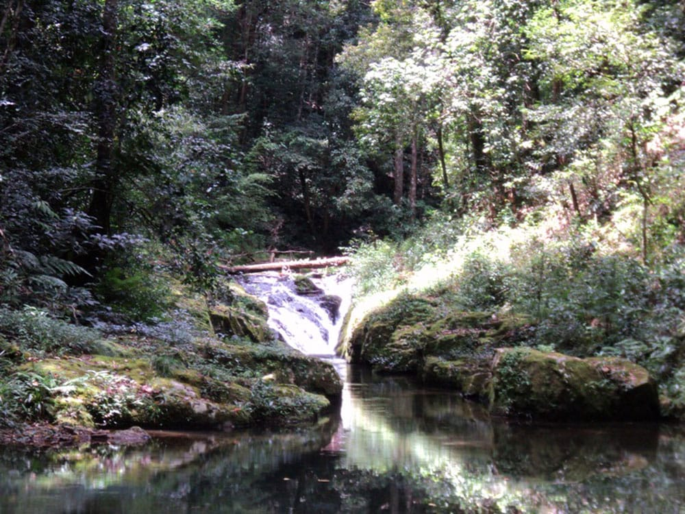 Suối trong rừng Bidoup