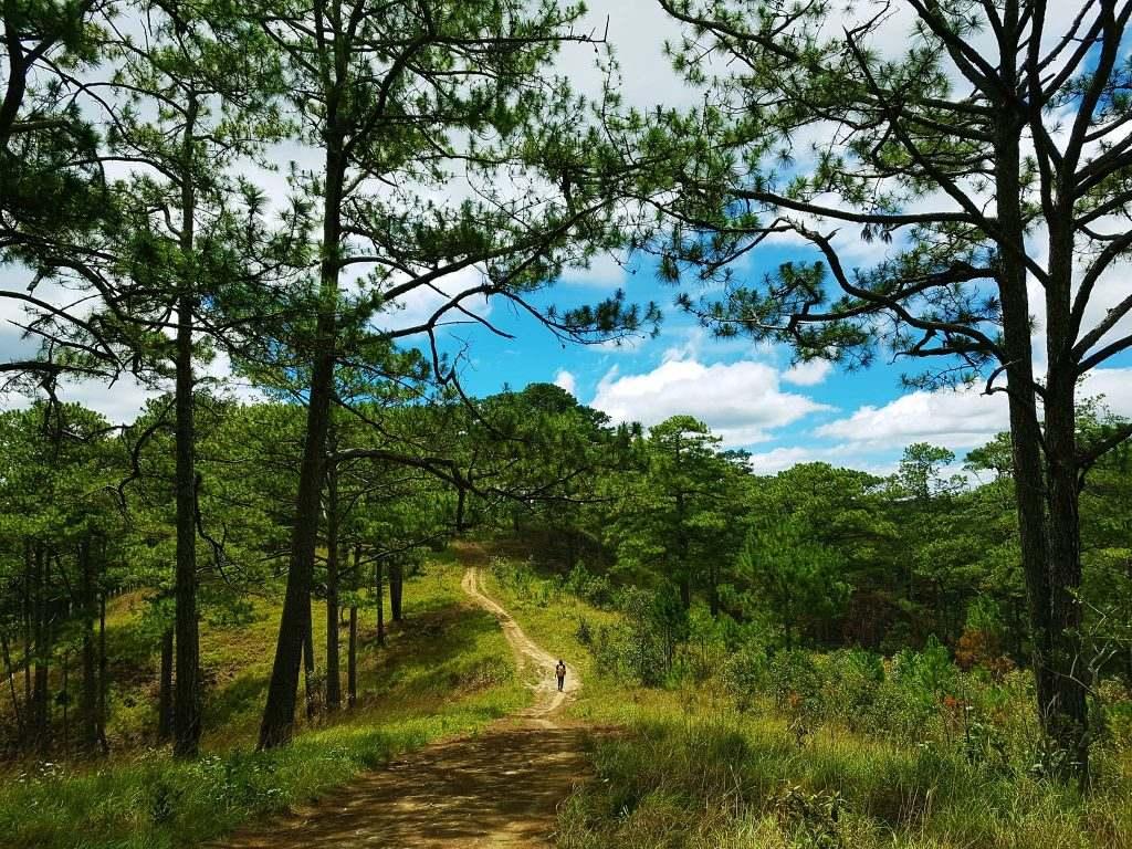 Kinh nghiệm trekking Bidoup từ A-Z chi tiết và đầy đủ