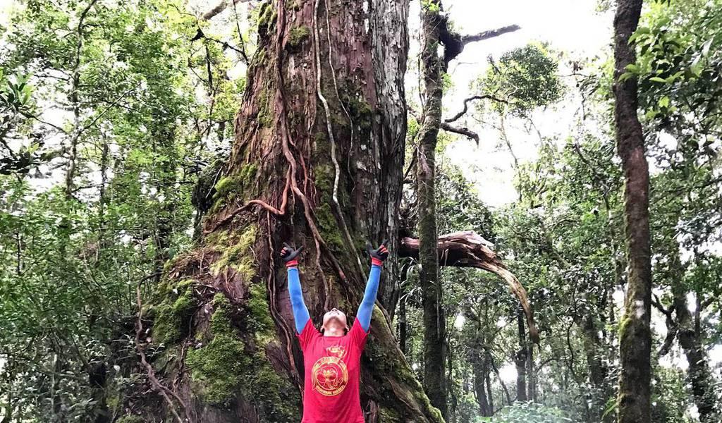 Cây Pơmu 1300 năm tuổi ở vườn quốc gia Bidoup