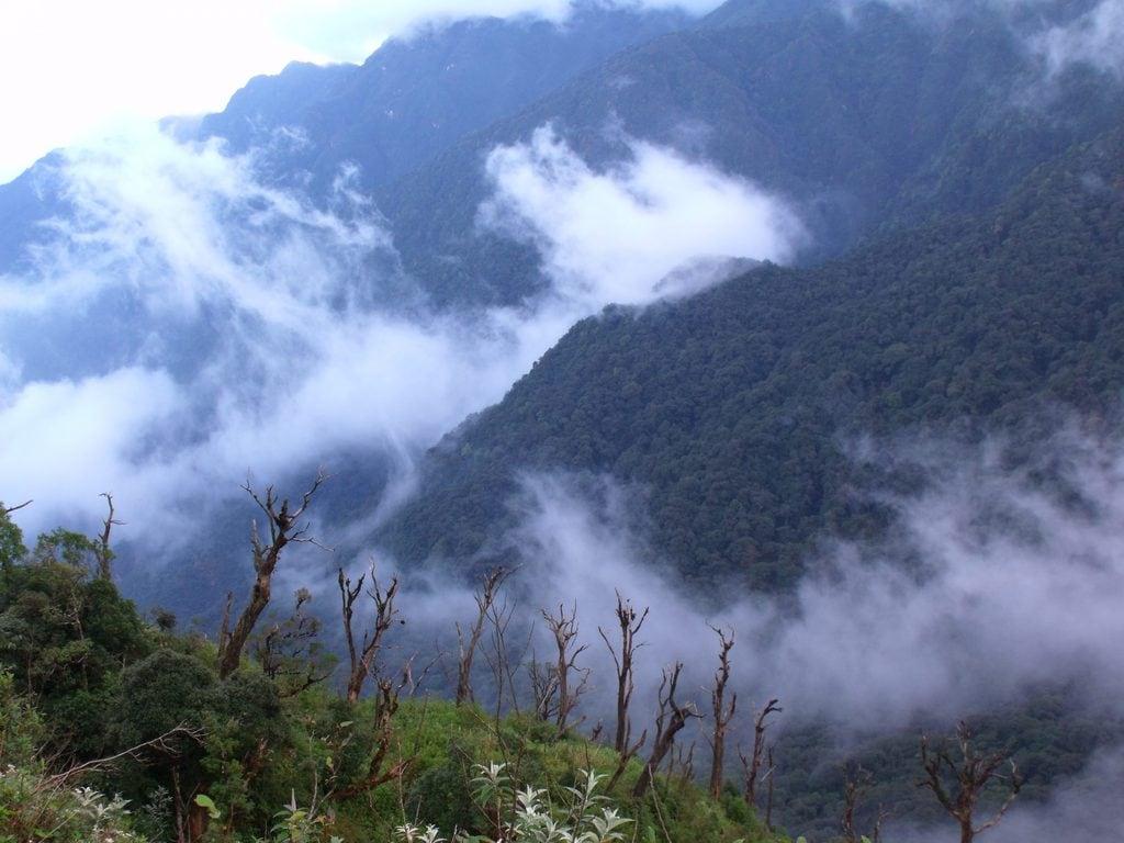 Khám phá khu rừng Hoàng Liên Sơn nổi tiếng