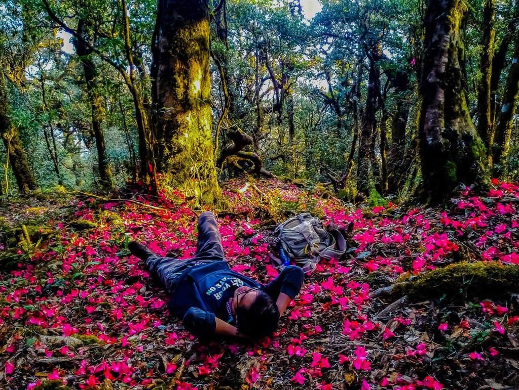 Chinh phục Putaleng - mùa hoa đỗ quyên nở