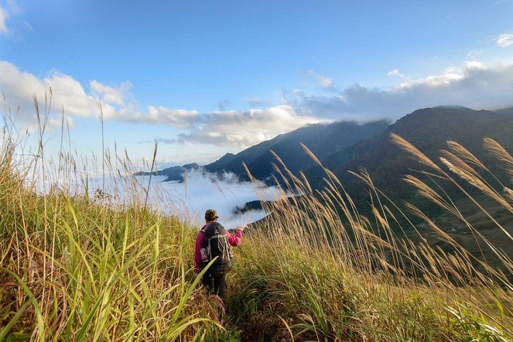 Đồi cỏ lau bạt ngàn trên đỉnh Lùng Cúng