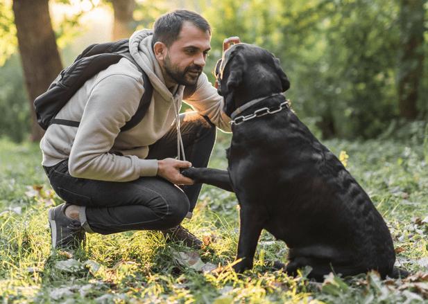 Trekking cùng thú cưng