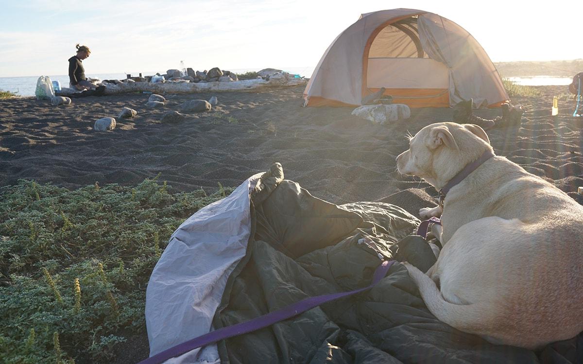 Trekking cùng thú cưng – người bạn đồng hành thú vị