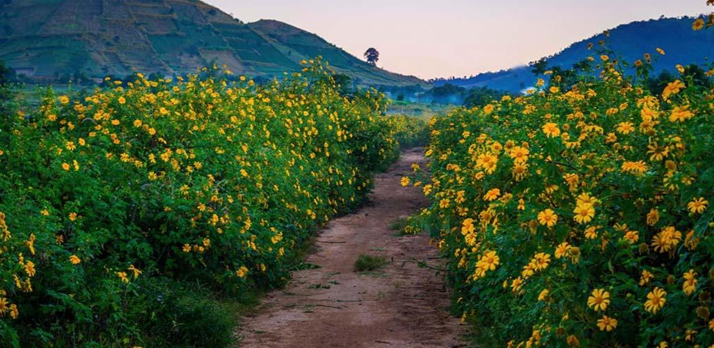 Ngỡ ngàng những mùa hoa tuyệt đẹp ở Đà Lạt