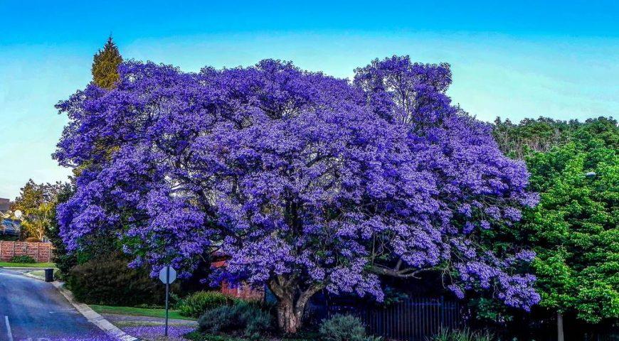 mùa hoa Đà Lạt