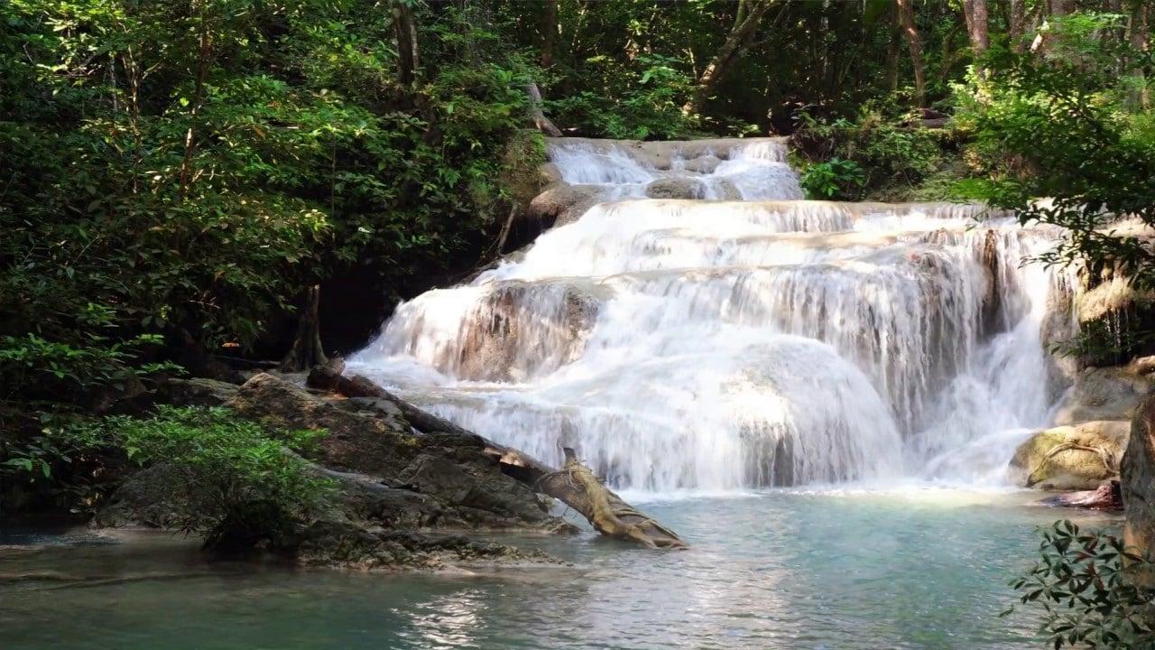 Rừng Phước Bình - lá phổi xanh của Ninh Thuận